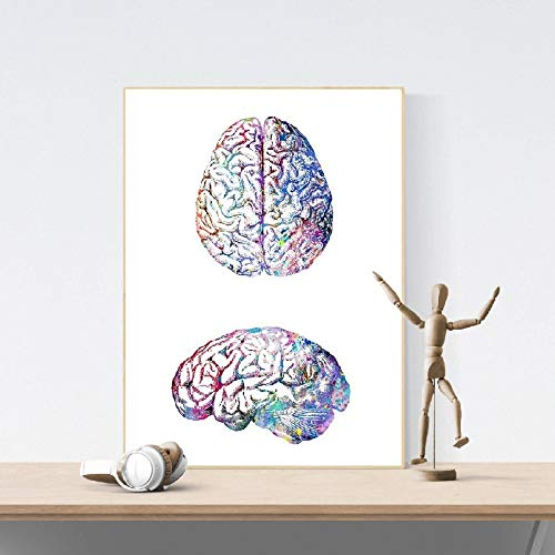 adgkitb canvas Cervello Umano Anatomia Lato e Upside View s Colorful Wall Art Biology Science Medical Painting Gift 30x45cm No Frame