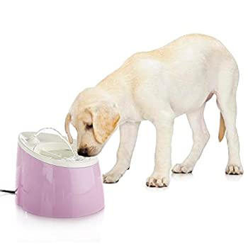 Happy & Polly Fontaine à eau Distributeur d?eau 1.8L pour petit chat, chien