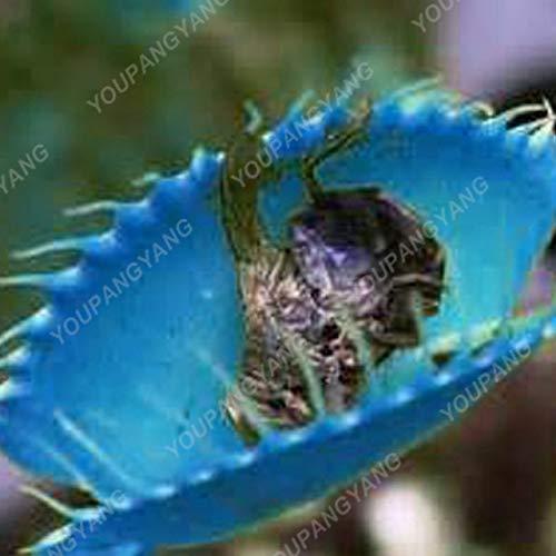 Shopmeeko 50 Stück Garten Topfpflanze Fliegenfalle Bonsai Bonsai Dionaea Muscipula Riesenclip Venusfliegenfalle Pflanze Bonsai Fleischfressende Pflanze Bonsa: Dunkelgrau