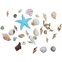Adornos Conchas Decoración De Bodas En La Playa Fiesta Nave Estrellas De Mar Naturales - D