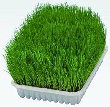 Trixie Grow Your Own Cat Grass 50g, 100g + Option of Growing Tray