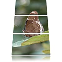 piccolo marrone farfalla 3 pezzi picture tela dell'immagine su tela