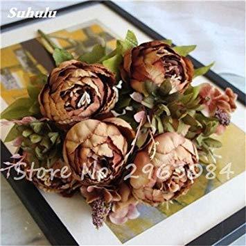10 Pcs mélange de couleurs pivoine Graines jardin Fleurs vivaces en pot Graines Pivoine Fleurs (non Pivoine ampoules) Jardin Bonsai Plantes 5