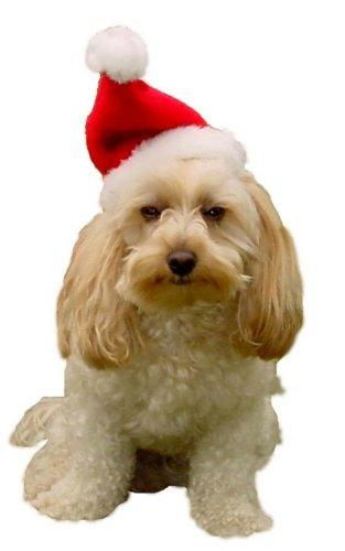 -Hundemütze, Größe S, Rot/Weiß (Kostüme Verkauf Online)