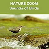 Birdsong with Forest Stream