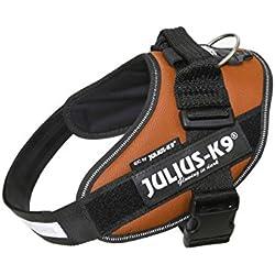 Julius-K9 IDC-Power Harnais pour Chien Cuivre Taille 0