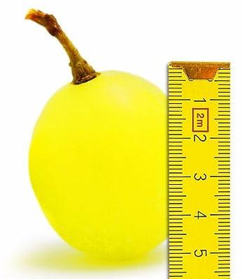 BALDUR-Garten Tafel-Trauben 'Maxi White' Weinreben, 1 Pflanze, Vitis vinifera von Baldur-Garten - Du und dein Garten