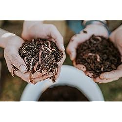 WORMSYSTEMS Startpopulation mit vitale Kompostwürmer in Substrat (8 Liter) für Wurmkisten und Wurmkomposter (kostenloser Versand)