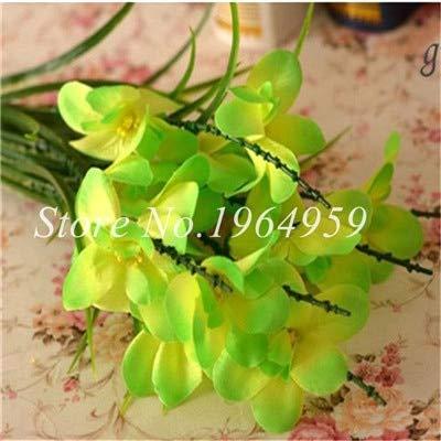 Shopmeeko Graines: Vase spécial coloré Bonsai Fleur Freesia Bonsai Décor rare orchidée Illuminez votre jardin personnel Bonsai 100 Pcs/Sac: 9