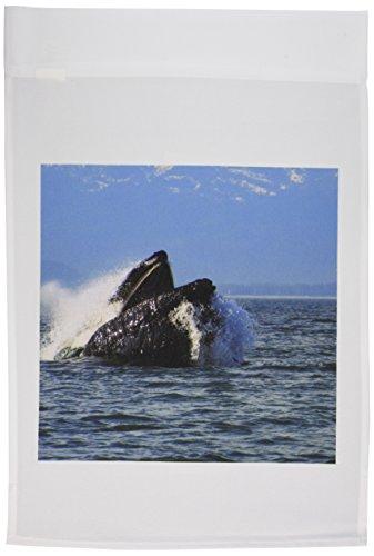 3drose-fl-21604-1buckelwal-essen-herring-in-the-pacific-ocean-in-sdost-alaska-garden-flagge-12von-18