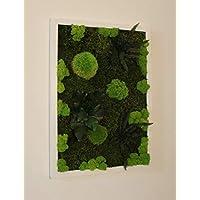 """Quadro Vegetale - Composizione""""Foresta D""""- 50 x 35 cm -"""