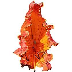 Afrikanische Tulpenbaum (Spathodea campanulata) 10 Samen Zierbaum