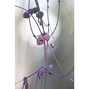 CM Creation 3446035568837 Decoplex Soft Branche Tableau Plexi Multicolore 120 x 3 x 80 cm