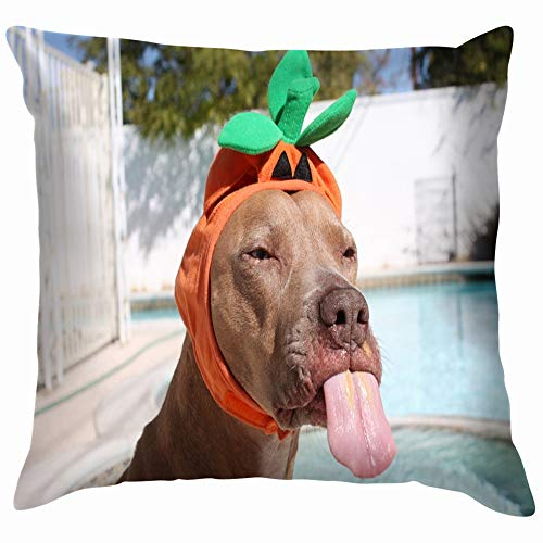 beautiful& Funny Dog Wearing Cute Halloween Costume Animals Wildlife Holidays Funny Square Throw Pillow Cases Cushion Cover for Bedroom Living Room Decorative 18X18 Inch