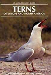 Terns of Europe and North America (Helm Identification Guides)