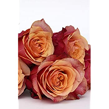 Carnet de Notes: Petit journal personnel de 121 pages lignées avec couverture « Roses - Chausson de danse »