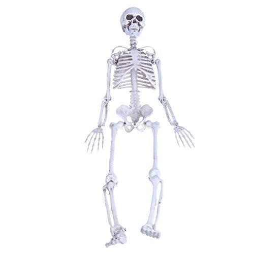 Jiamins Menschliches Skelett Mittelschädel Volles Körper Anatomisches Modell
