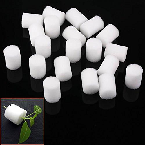 ZHOUBA Lot de 20 Colliers de clonage en Mousse hydroponique pour Protection des Racines 25 mm Blanc