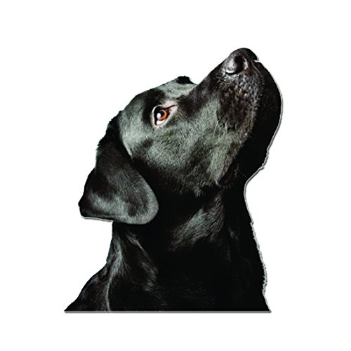 Raptor Hunting Solutions Auto Aufkleber Wohnkultur Embleme Etikett 11 cm х 9 cm Schwarzer Labrador Retriever Hund Vinyl Decal -