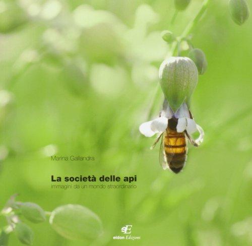 La società delle api. Immagini di un mondo staordinario. Ediz. italiana e inglese (Daphne) por Marina Gallandra