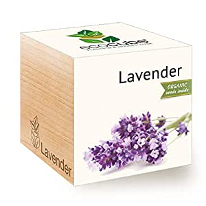 Feel Green Ecocube Lavender, Certified Organic, Grow Your Own Kit, Sustainable & Unusual Gift (100% Eco Friendly), Plant in A Wooden Cube, Made in Austria