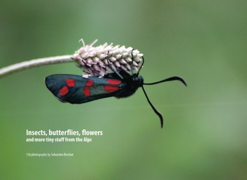 Insects, butterflies, flowers and more tiny stuff from the Alps: 150 photographs