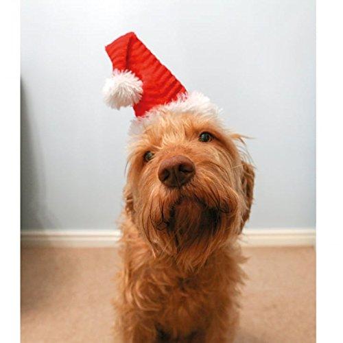 Rosewood Christmas Neuheit Santa Hat für -