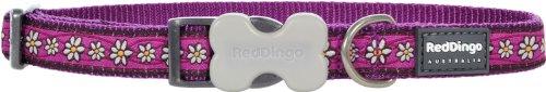 red-dingo-designer-dog-collar-daisy-chain-purple-15mm-x-24-36cm-s