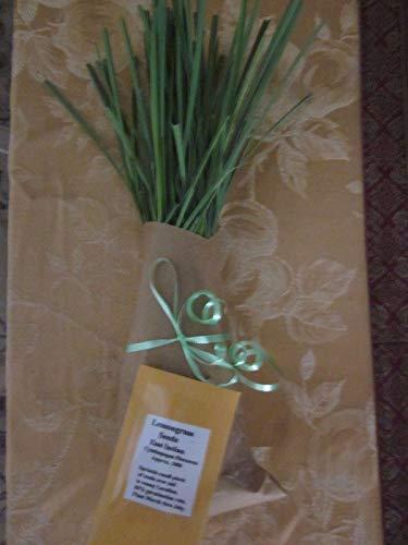 1 Hethy Medium Zitronengras Cluster & 1 Packet Seeds 1000 by Farmerly -