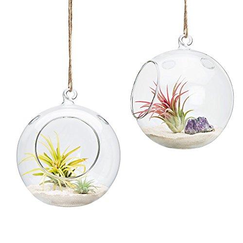 Mkono 2unidades de cristal para colgar Planter Air plantas suculentas terrario, 6'globo vela soporte