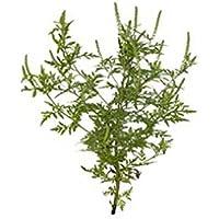 Frottiertuch Egeria Herba 46003