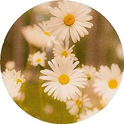 Azeeda 24 x 40mm Redondas 'Flores de la Margarita' Pegatinas (SK00003450)