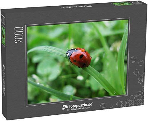 fotopuzzle.de Puzzle 2000 Teile Marienkäfer/ Marienkäfer auf einem Grashalm mit einem Regentropfen auf dem Rücken -