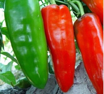 Promotion! 50pcs Red Hot Pepper Seeds 100% Haute Qualité Paprika