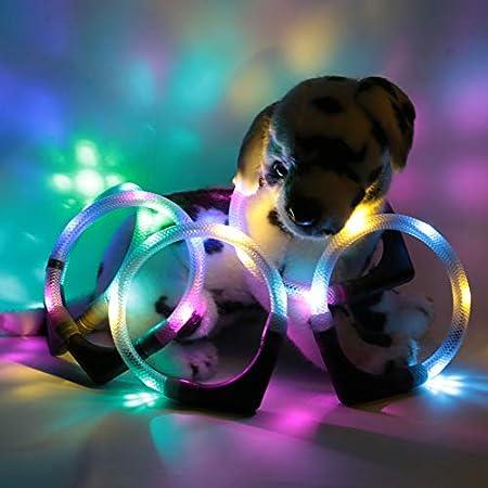 LEUCHTIE® Leuchthalsband Plus eisblau-vanille Größe 35 I LED-Halsband für Hunde I 100 h Leuchtdauer I wasserdicht I…