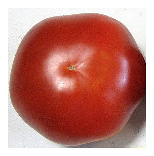 Tomate Saint Pierre - Tomaten Samen - 25 Samen