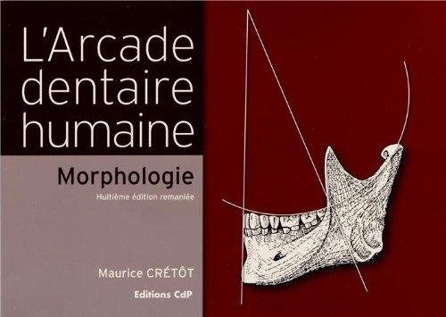 L'arcade dentaire humaine - Morphologie