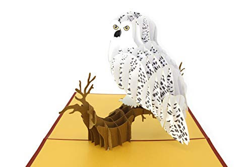 PopLife Pop-Up-Karte Schnee Eule 3D Vogel ()
