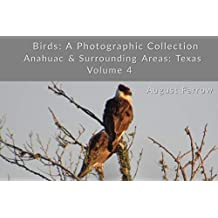 Birds: A Photographic Collection: Anahuac & Surrounding Areas: Texas - Volume 4 (Birds of Anahuac) (English Edition)