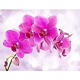 Fototapete Orchidee Pink Vlies Wand Tapete Wohnzimmer Schlafzimmer Büro Flur Dekoration Wandbilder XXL Moderne Wanddeko - 100% MADE IN GERMANY - Runa Tapeten 9012010a
