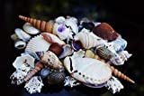 BELLE VOUS 130 Deko Muscheln - Haus Dekoration, Echte Seesterne Muscheln zum Basteln und Meeresschnecken, für Kerzenherstellung, Strand Motto-Party, Aquarium und Maritime Hochzeits-Deko - 8