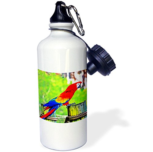 """3dRose wb_178510_1 """"macaw hdr saturated bird image"""" Sports Water Bottle, 21 oz, White"""