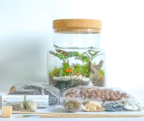 Pflanzterrarium-Set, handgefertigt, klares Glas, offen oder geschlossen mit Korkplatte, DIY für Zuhause, Garten, Blumentopf, für drinnen und draußen