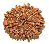 nepali rudraksha 10 mukhi rudraksha 100% natural rudraksha original rudraksha