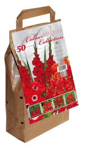 Colour Collection Blumenzwiebeln, Sommerblumen, Rot, 50Stück