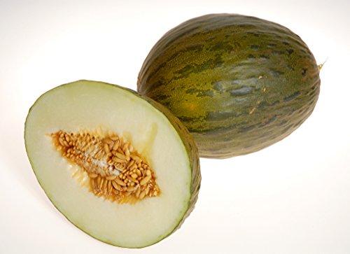 20-graines-melon-vert-despagne-piel-de-sapo