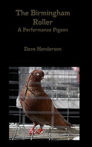 The Birmingham Roller a Performance Pigeon by Dave Henderson (September 11,2014)