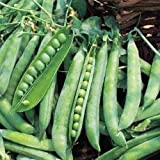 Just Seed Pea - Greenshaft - 250 Seeds