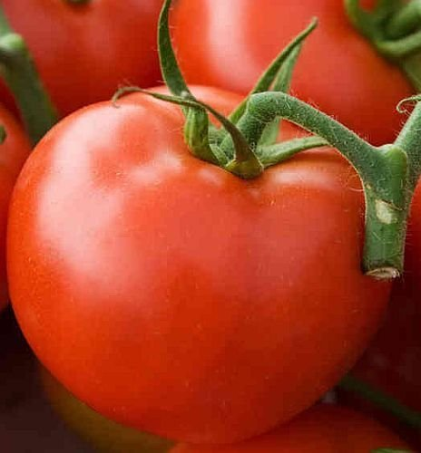 Tomate Arkansas Traveler - tomate - 50 graines
