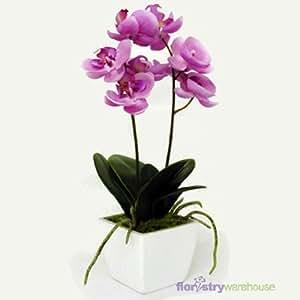FloristryWarehouse Orchidee, künstlich, Seide, in Topf, Lila / Pink 33cm